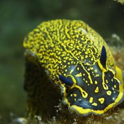 Naturalista Subacuático