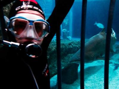 Baño con tiburones