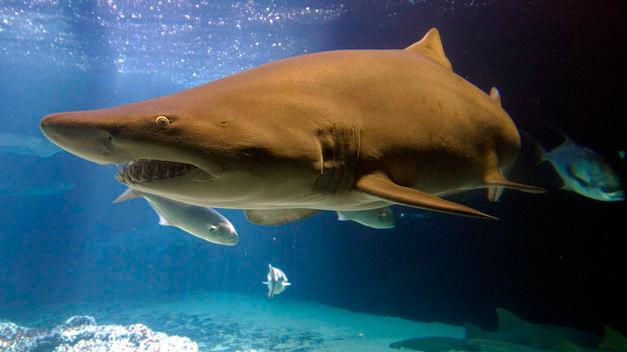 img_aquatours_buceo_con_tiburones_01a
